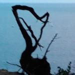 La figura del arpa natural de Palamós